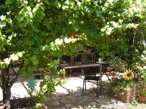 ... a shady spot under the vines
