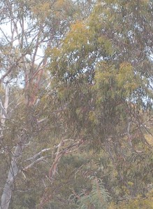 ...colours softened by the rain, trees just outside our back door
