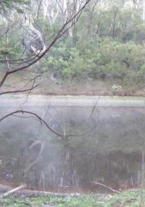 ... mist rising off the dam...