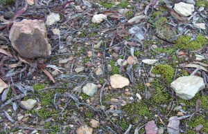 ...moss growing amongst the shale...