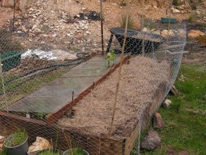 Our permanent bed for the asparagus, alongside the rhubarb that i tried unsuccessfully to move last year.