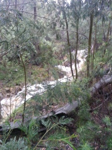 Rushing waters of our creek below the dam overflow