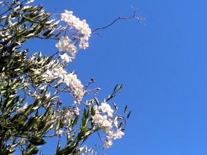 flowers against a blue sky