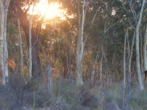 evening light across the top 'paddock'