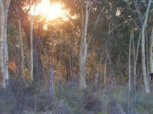 evening light across the top 'paddock'
