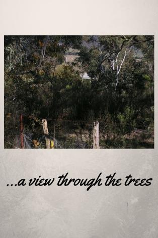 a view through hte trees